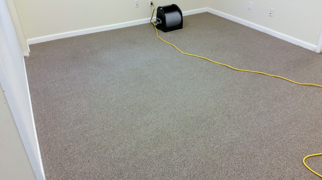 Picture of carpeting after cleaning in the reception area. www.absolutelykleener.com